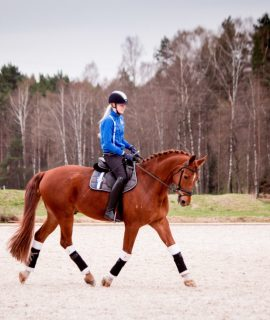 Allround Oldenburg gelding for sale