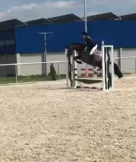 Super braves doppelveranlagtes Pony mit top Abstammung
