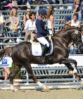 Elite Allround Pony Wallach