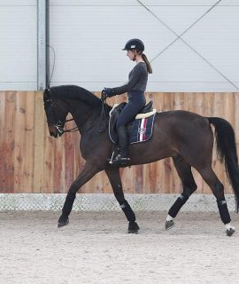 Safe and easy PSG gelding