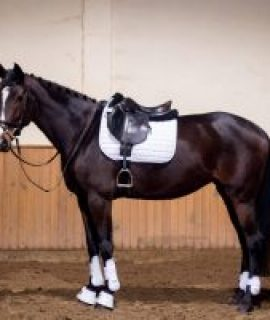 Allround mare (vice free) for sale