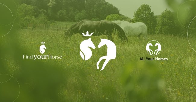 NEWS – Find Your Horse wird zu All Your Horses